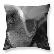 Birds 51 Throw Pillow