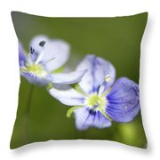 Birds Eye Speedwell Throw Pillow