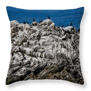 Bird's Island Throw Pillow