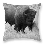 Bison And Buffalo Throw Pillow