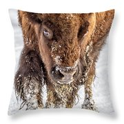 Bison Approaching  8163 Throw Pillow