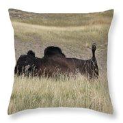 Bison Backscratching Throw Pillow
