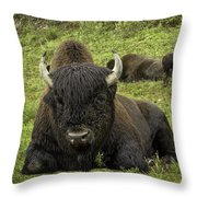 Bison Bliss Throw Pillow