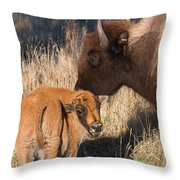 Bison Calf And Its Mother Throw Pillow