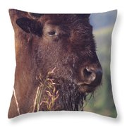Bison Contemplating Throw Pillow