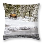 Bison Country  8101 Throw Pillow