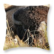Bison In Hiding Throw Pillow