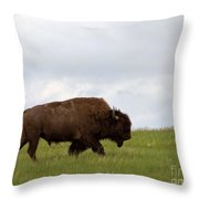 Bison On The American Prairie Throw Pillow by Olivier Le Queinec