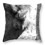 Bison Portrait Monochrome Throw Pillow