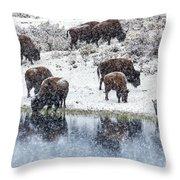 Bison Snow Reflecton Throw Pillow