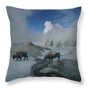 Bison Walking In Front Of Lion Geyser Throw Pillow