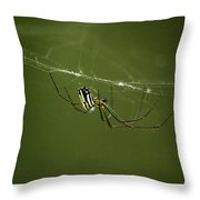 Bitsy Spider Throw Pillow