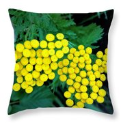 Bitter Buttons Throw Pillow