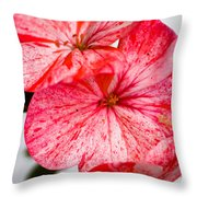 Bizzy Lizzy Throw Pillow