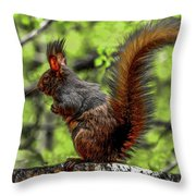 Black Abert's Squirrel - Half And Half Throw Pillow