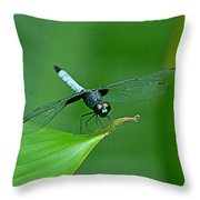 Black And Blue Dragonfly Throw Pillow