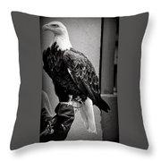 Black And White Bald Eagle Throw Pillow