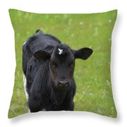 Black And White Calf Standing In A Field Throw Pillow