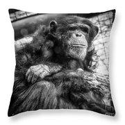 Black And White Chimp Throw Pillow