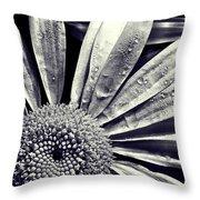Black And White Daisy  Throw Pillow