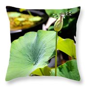 Black And White Dragonfly On A Lotus Bud Throw Pillow