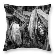 Black And White Ear Of Corn On The Stalk Throw Pillow