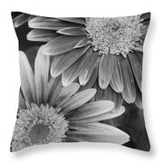 Black And White Gerber Daisies 2 Throw Pillow