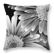 Black And White Gerber Daisies 3 Throw Pillow