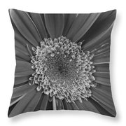 Black And White Gerber Daisy 4 Throw Pillow