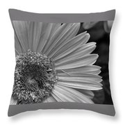 Black And White Gerber Daisy 5 Throw Pillow