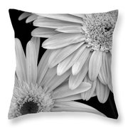Black And White Gerbera Daisies 1 Throw Pillow by Amy Fose