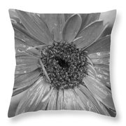 Black And White Gerbera Daisy Throw Pillow