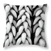 Black And White Hanging Plant Detail. Throw Pillow