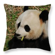 Black And White Panda Bear Eating Green Bamboo Shoots Throw Pillow
