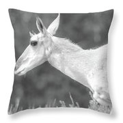 Black And White Pronghorn Portrait Throw Pillow