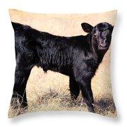 Black Angus Baby Calf Throw Pillow