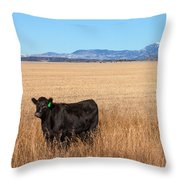 Black Angus Looking Throw Pillow