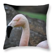 Black Beak On A Chilean Flamingo Throw Pillow
