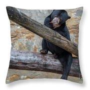 Black Bear Cub Sitting On Tree Trunk Throw Pillow