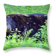 A Florida Black Bear Throw Pillow