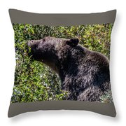 Black Bear In Glacier Eating Throw Pillow