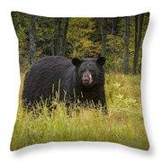 Black Bear In The Grass Throw Pillow