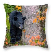 Black Bear In Tree Throw Pillow