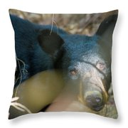 Black Bear Oh My Throw Pillow