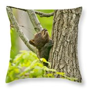 Black Bear Pictures 82 Throw Pillow
