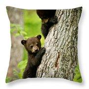 Black Bear Pictures 84 Throw Pillow
