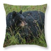 Black Bear Sow Throw Pillow