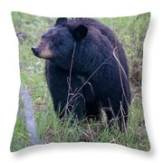 Black Bear Yellowstone Np_grk7085_05222018 Throw Pillow