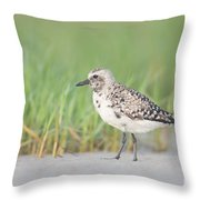 Black-bellied Plover I Throw Pillow