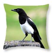 Black-billed Magpie Throw Pillow